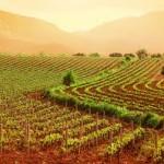 Trabajar en Francia en el sector vinicola
