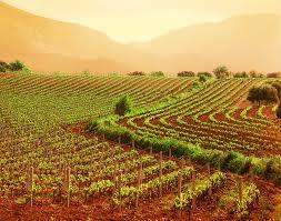 ndice16 - Trabajar en Francia en el sector vinicola