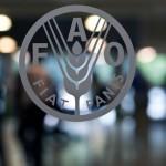 Prácticas remuneradas en la FAO