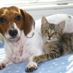 Reino Unido busca veterinarios