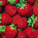 Trabaja en Inglaterra recogiendo fresas