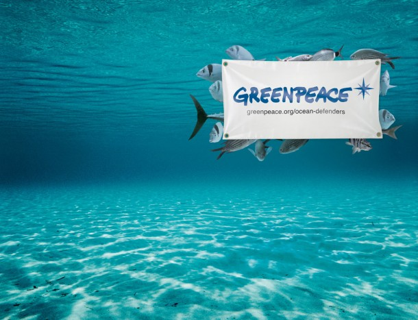 greenpeace ocean defenders gr 610x467 - Prácticas remuneradas en Greenpeace Amesterdam