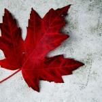 Becas para estudios de doctorado en Canadá