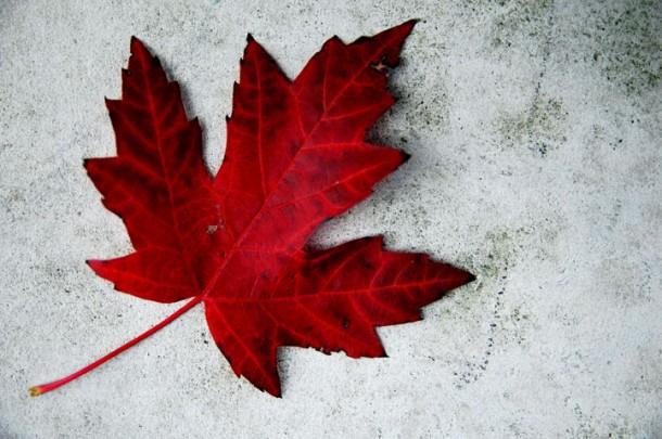 hojacanada 610x405 - Becas para estudios de doctorado en Canadá