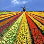 Holanda: Consejos prácticos para buscar trabajo