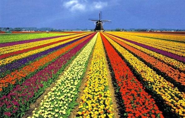 Holanda consejos pr cticos para buscar trabajo ingalicia - Jardines de holanda ...